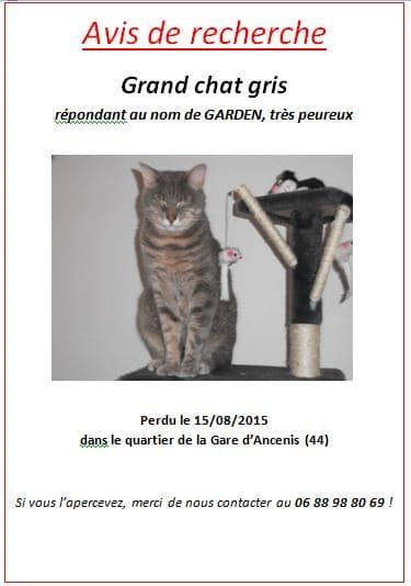 avis de recherche chat chien perdu disparu